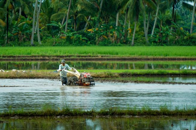 Occupation Water Tree Growth Waterfront Outdoors Real People Men Nature Working Farmer Humaninterest Humaninterestid Humaninterestphotos Humaninterestindonesia Humaninterestphotography