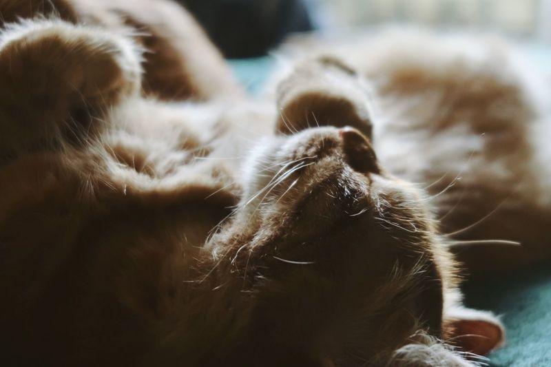 Orange kitten sleeping