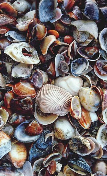 Directly above shot of seashells on beach