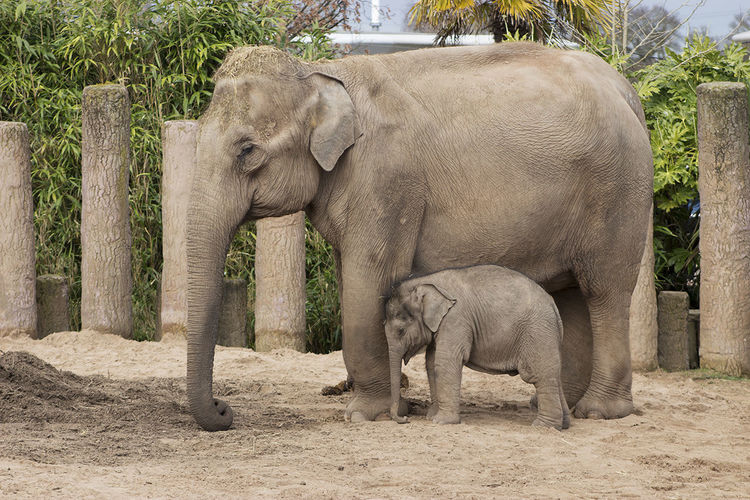 Elephant Nature Animal Elephant Calf Young Animal Animal Themes Standing No People Animals In The Wild Togetherness Outdoors Baby Elephant Mother Elephant Beautiful Beauty In Nature Animal Wildlife Animal Head  Wildlife Photography Mammal Animal Trunk Side View