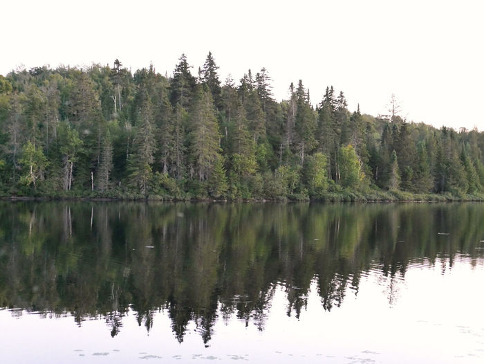 Reflection of trees in lake against clear sky