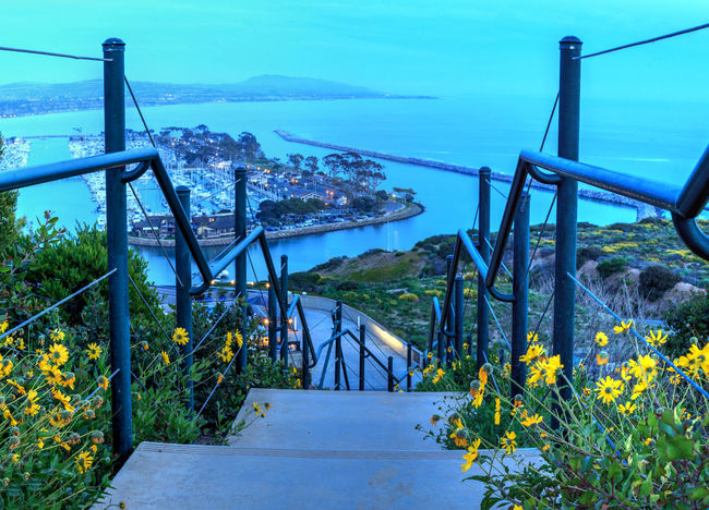 Steps along the hiking trail above Dana Point Harbor at sunset in Southern California, USA California Daisy Daisy Flower Dana Point Harbor Dana Point, Ca Dusk Evening Harbor Harbor View Hiking Trail Nature Ocean Ocean View Stairs Steps