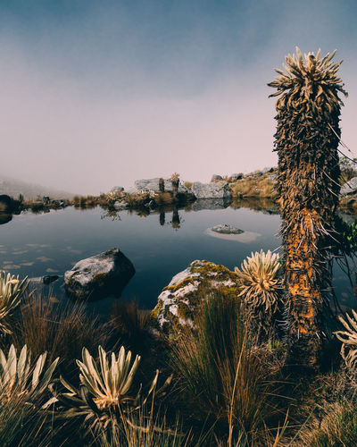 El Cocuy National Park National Park Water Sky Plant Nature Tree No People Tranquility Sea Beauty In Nature Scenics - Nature Day Tranquil Scene Architecture Growth Outdoors Built Structure Building Exterior Non-urban Scene