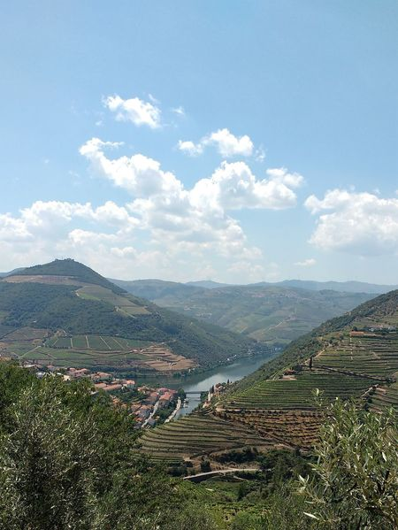 Alto Duoro River Duoro Agriculture Blue Sky Grapes Grass High Angle View Hillside Landscape Mountain No People Outdoors Port Wine Production Quinta River Rural Scene Terraced Field Terraces Town Tranquil Scene Tree Vine Vineyard