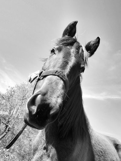 Low Angle View Of Horse Against Sky On Sunny Day