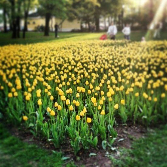 Немного цветочков в день борьбы с гомофобами)хахаха