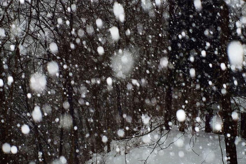 Somerset,KY Showcase: February Snow Snow ❄ Snowstorm Somerset Kentucky  Snowflakes