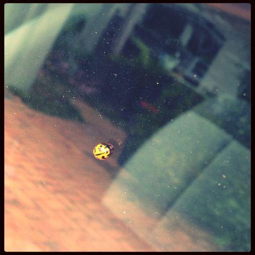 Found this little munchkin on my car window