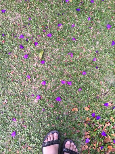 Purple petals Jerai Kedah