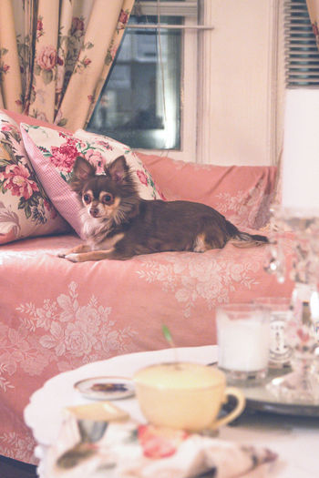 Mammal Cat Animal Themes One Animal Pets Domestic Cat Animal Feline Domestic Animals Domestic Vertebrate Relaxation No People Home Interior Indoors  Portrait Furniture Window Looking Looking At Camera Floral Pattern Whisker
