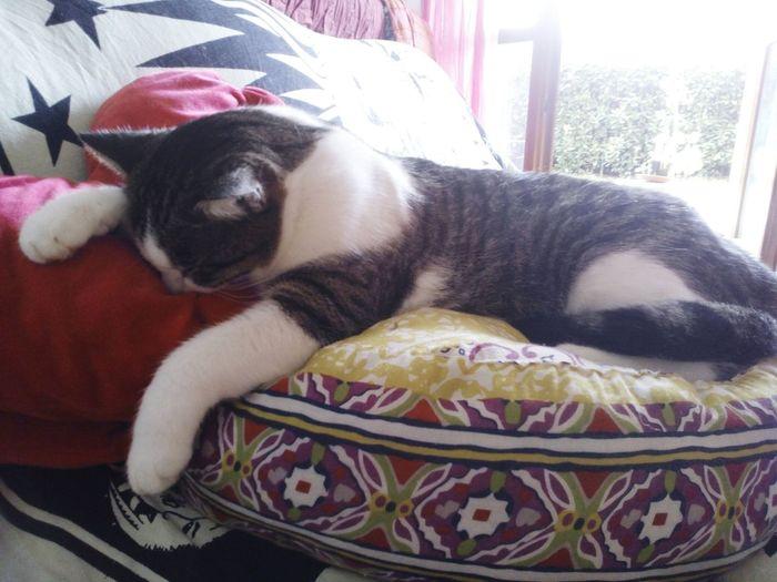 Gatti Cheese! Eyem Gallery Relaxing Cuore❤ Amore❤ Cat♡ Enjoying Life Dormire