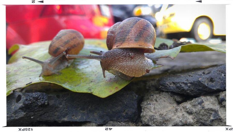 Micro Nature