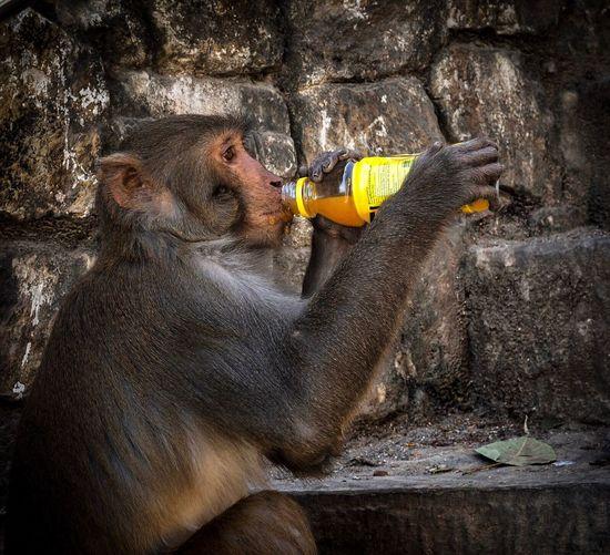 Refreshed EyeEm Best Shots Eyemcaptured EyeEm Selects EyeEm Nature Lover Travel Photography Nepal Swayambhunath Monkeytemple Animal Photography Cheeky Monkey Monkey Animal Portrait Animal Themes