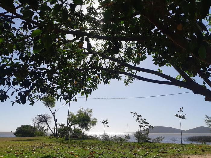 Water Branch Leaf Tree Area Lake Sky Landscape Tea Crop