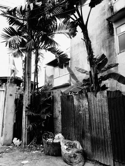Tree Trunk Outdoors Growth Backyard Day Dirty Large Group Of Objects Messy Tall - High No People Bangkok Thailand Street