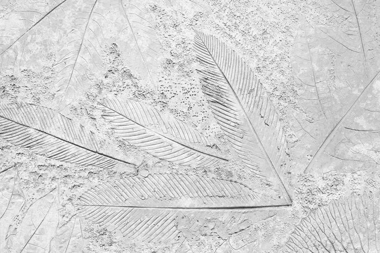 High angle view of feather on snow covered land