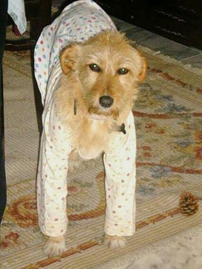 Pet Photography  Animal Photography EyeEm Porto Dogslife Doglover Dogs Of EyeEm