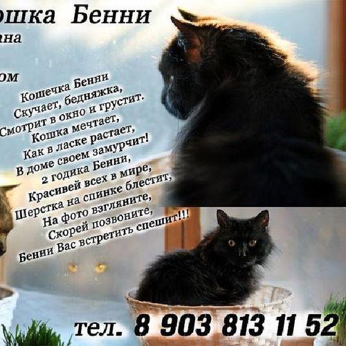 Кошка Бенни ищет дом!!! Ищу дом!!! ищудом вдобрыеруки