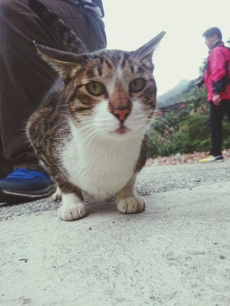 EyeEm Meetup - 猴硐 Cat Cat Village