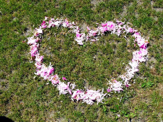 Flower Grass Heart Heart Shape Lato Love Miłość Nature Pink Color Serce Summer Summertime