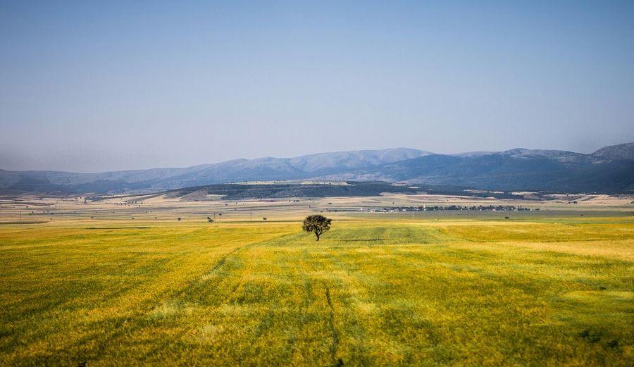 Single tree in large field
