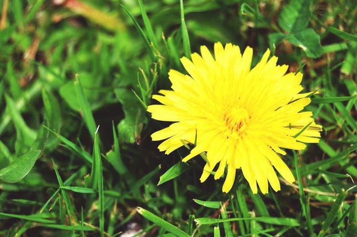 Fleurs Jaune Picture