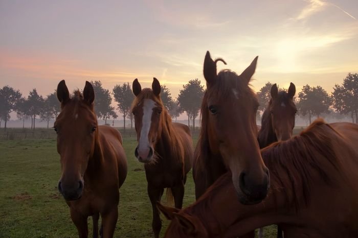 Curious who is photographing them. Photographing Animal Wildlife Landscape Cloud - Sky Horse Nature Domestic Animals Naturephotographer Sunrise_Collection Trees Eyeemnaturelover Naturephotography Holland Fujifilm Beauty In Nature Foals Rise And Shine Eyeemsunrise Horses
