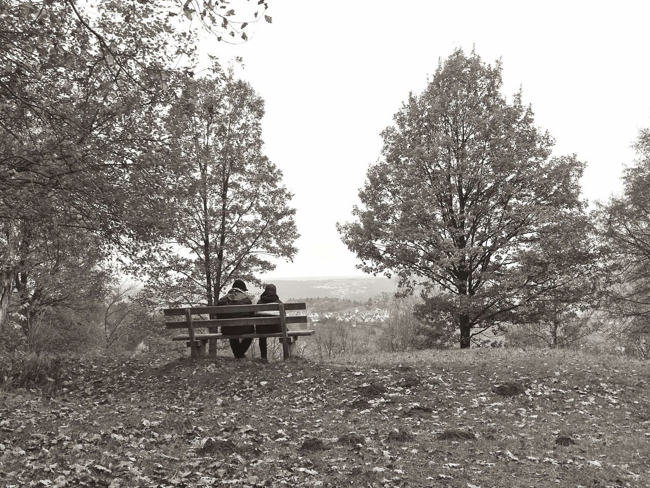 tree, plant, bench, seat, nature, day, land, field, sky, tranquility, park, growth, beauty in nature, outdoors, tranquil scene, landscape, musical instrument, environment, clear sky, sitting, park bench