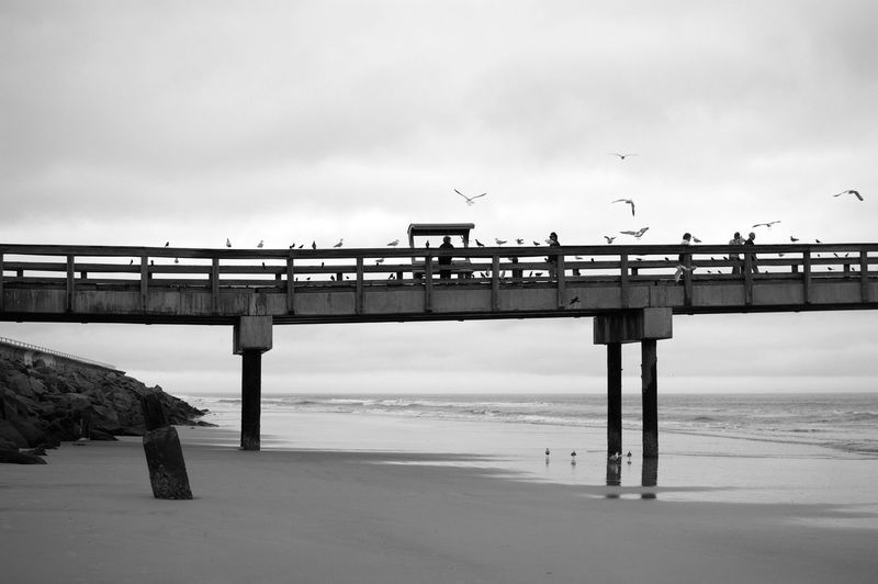 People and birds on pier at beach against sky