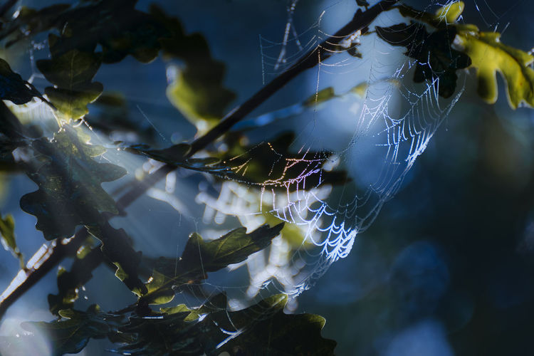 Low angle view of spider web on plant