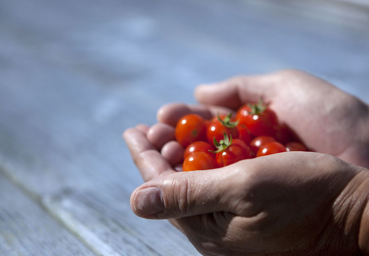 Close-up of hand holding tomato