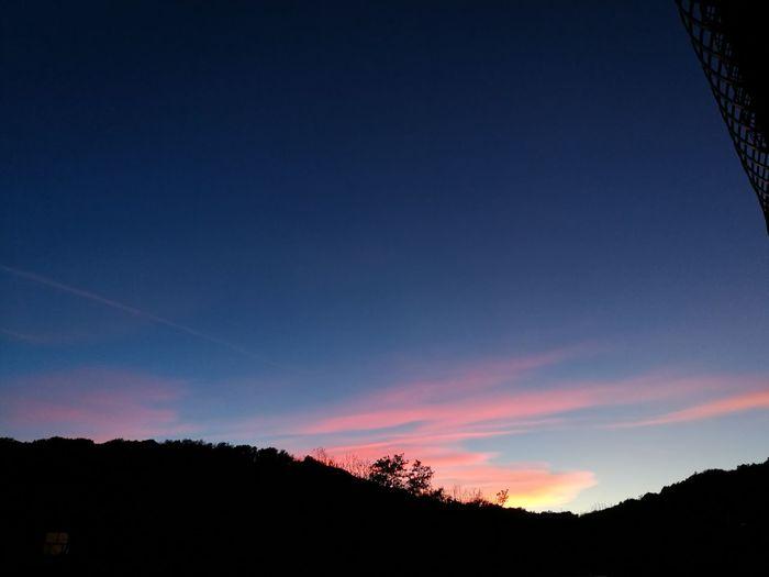 Tree Sunset Forest Sky