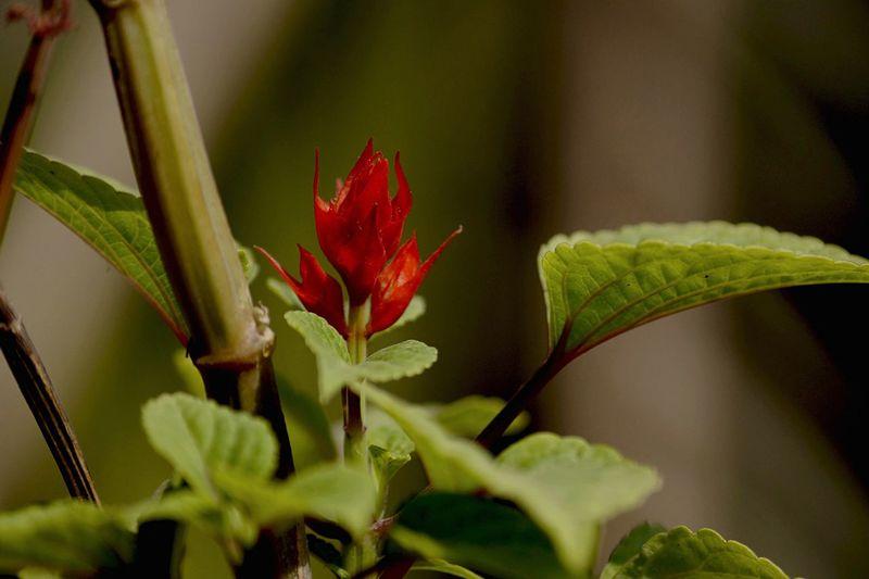 Flower Photography RedFlower
