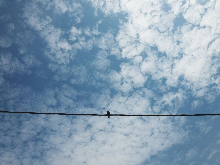 Chill Bird Chill IPhoneography Bird Streetphotography Cable Low Angle View Cloud - Sky Sky Power Line  No People Electricity