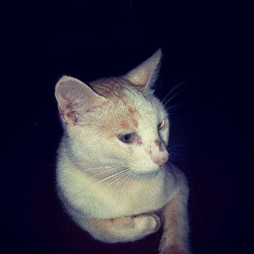 Look this cat looks like you Riya