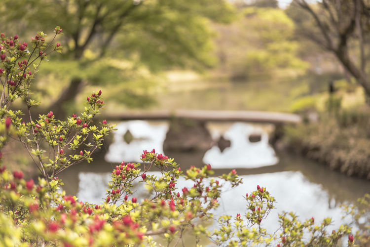 Scenic view of river amidst flowering plants