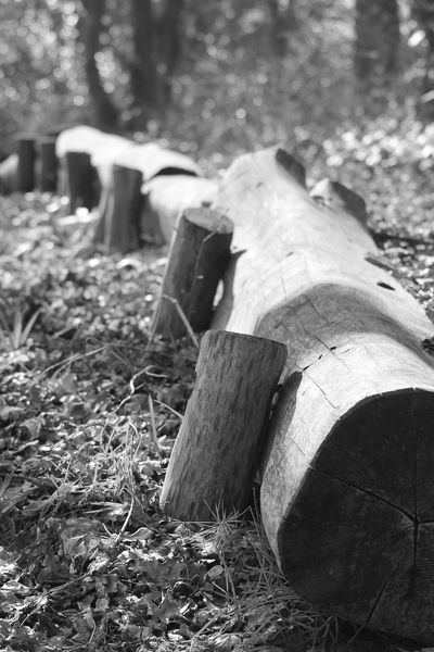 Bould by People put it in Nature Looksgood Wood Tree Blackandwhite