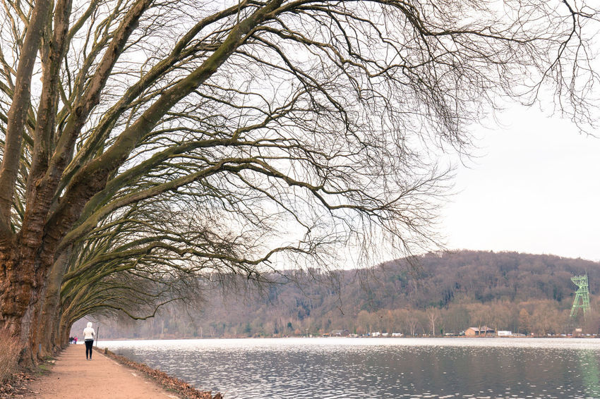Tree-Framed Angel at Baldeney See Essen City Winter Animal Themes Baldeneysee Bare Tree Beauty In Nature Branch Canonphotography Day Depressed Forest Lake Landscape Minimalism Nature No People Outdoors Scenics Sky Tranquil Scene Tranquility Travel Destinations Tree Water Winter Wonderland