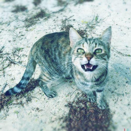 Off my property... EyeEm EyeEm Best Shots EyeEm Gallery Catoftheday Catlovers Cat Anger Pissedoff