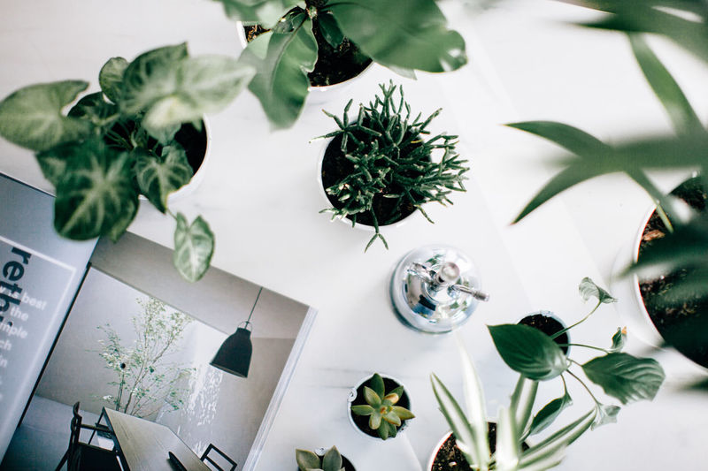 Green Green Color Plants Sydney, Australia Cactus Close-up Day Flatlay Flower Green Color Growth High Angle View Indoor Gardening Indoors  Leaf Nature No People Plant Potted Plant Table White Background