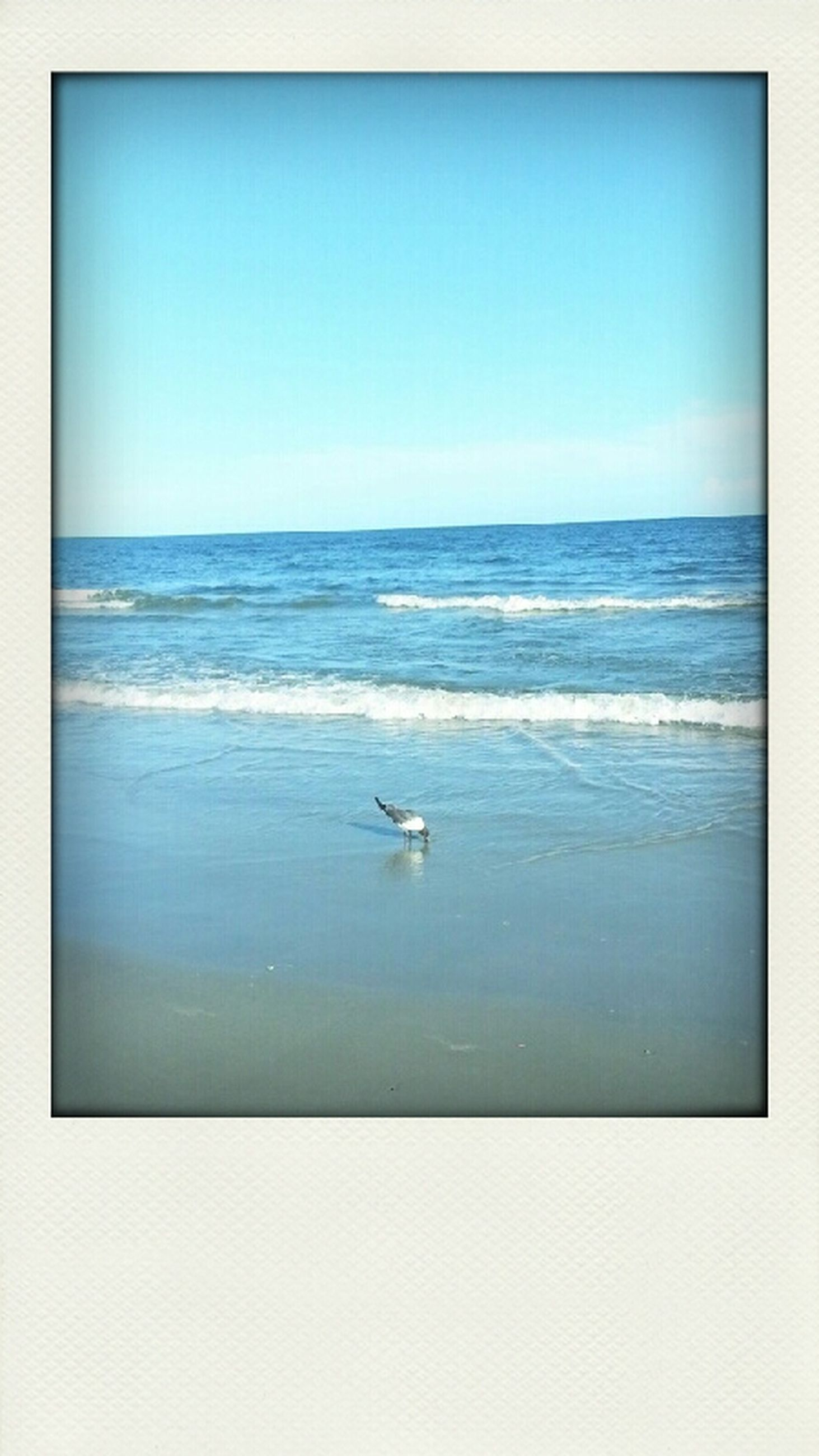sea, water, transfer print, bird, animal themes, horizon over water, wildlife, animals in the wild, copy space, clear sky, auto post production filter, one animal, flying, nature, tranquil scene, blue, beauty in nature, tranquility, scenics, seagull