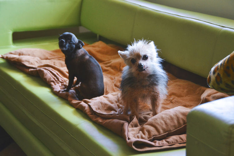 Dogs Green Portrait Of A Dog Portraits Animal Themes Close-up Comfortable Day Domestic Animals Good Morning Guard Dog Home Interior Indoors  Little Looking At Camera Mammal No People One Animal Pets Portrait Relaxation Scared Sitting Sofa Young Animal