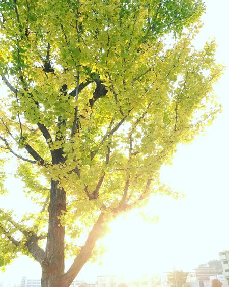The tree of fall color Tree Nature Autumn Leaf Outdoors Low Angle View Sky Sunlight