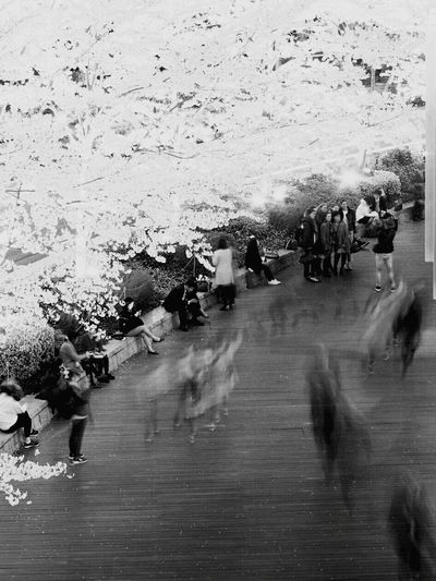 Tree Blackandwhite Black And White Collection  Monochrome World Black And White Collection  Monochrome _ Collection Monochromeart Cherry Blossom Tree Monochrome Nature Cityscape Monochrome Collection Monochrome Photography Beauty In Nature Cherry Blossoms Blossom Cherry Tree Plant Cherryblossoms Springtime Architecture Real People City Walking Architecture_bw Tree