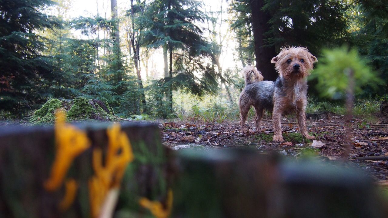 dog, pets, domestic animals, animal themes, one animal, tree, mammal, day, no people, forest, nature, outdoors, portrait