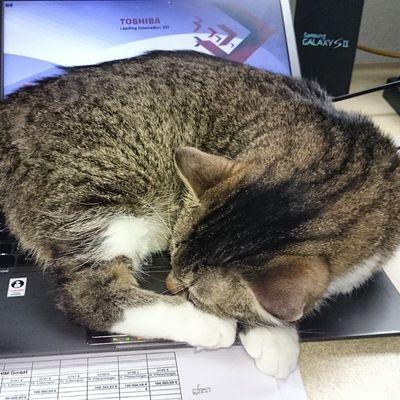 Meine russische Kollegin ist recht faul heute Vormittag... Officecat Wassilita_the_cat Schlafendetiere_tsez