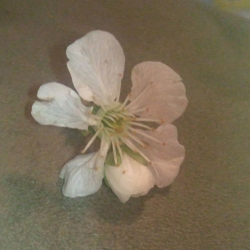 My little cutie pie brought me this flower. Glad he if finally home. Thiswherehebelongs