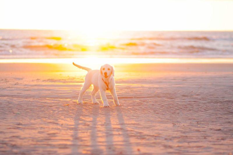 Sky Beach Land Sunset One Animal Dog Animal Themes Pets Sea Mammal Domestic Animal Canine Domestic Animals Water Sand Nature Horizon Beauty In Nature Horizon Over Water