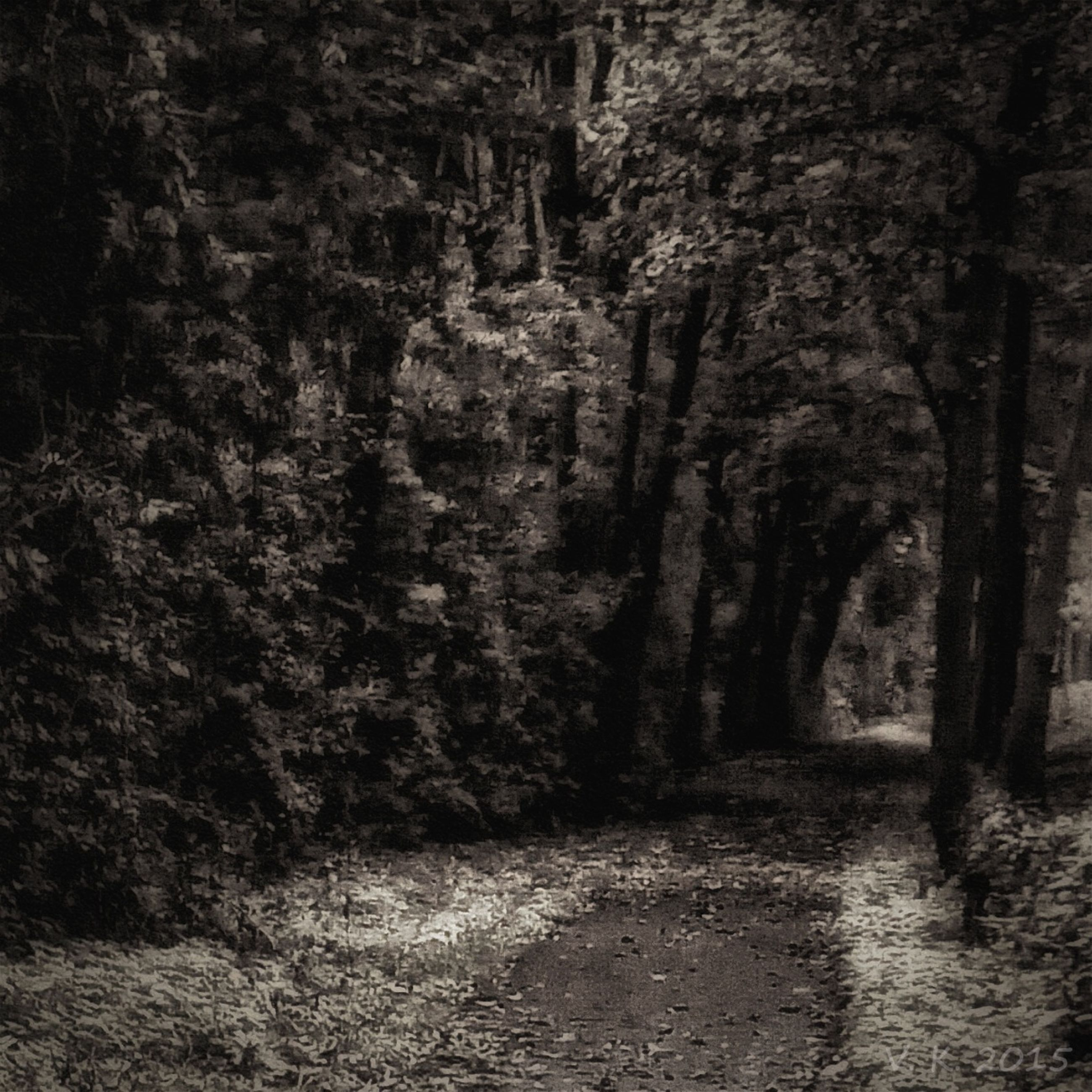 tree, the way forward, tranquility, forest, nature, tranquil scene, tree trunk, growth, narrow, beauty in nature, day, outdoors, no people, diminishing perspective, scenics, dirt road, footpath, pathway, non-urban scene, woodland