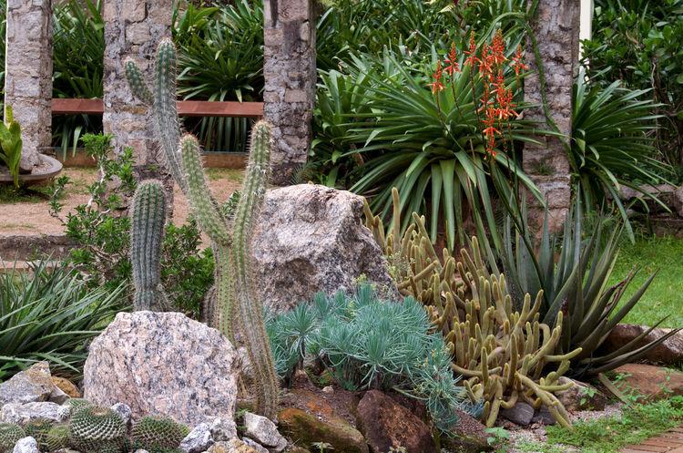 Beauty In Nature Brasil ♥ Cactus Cactus Flower Day Green Color Growth Jardim Botânico Rj Nature Nikon D5100  Outdoors Plant Rio De Janeiro Botanical Gardem Tranquility Tree Stone Cactus Garden